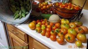 This is Monday's harvest.  Everything but the okra is slowing down, but we are still getting a lot.