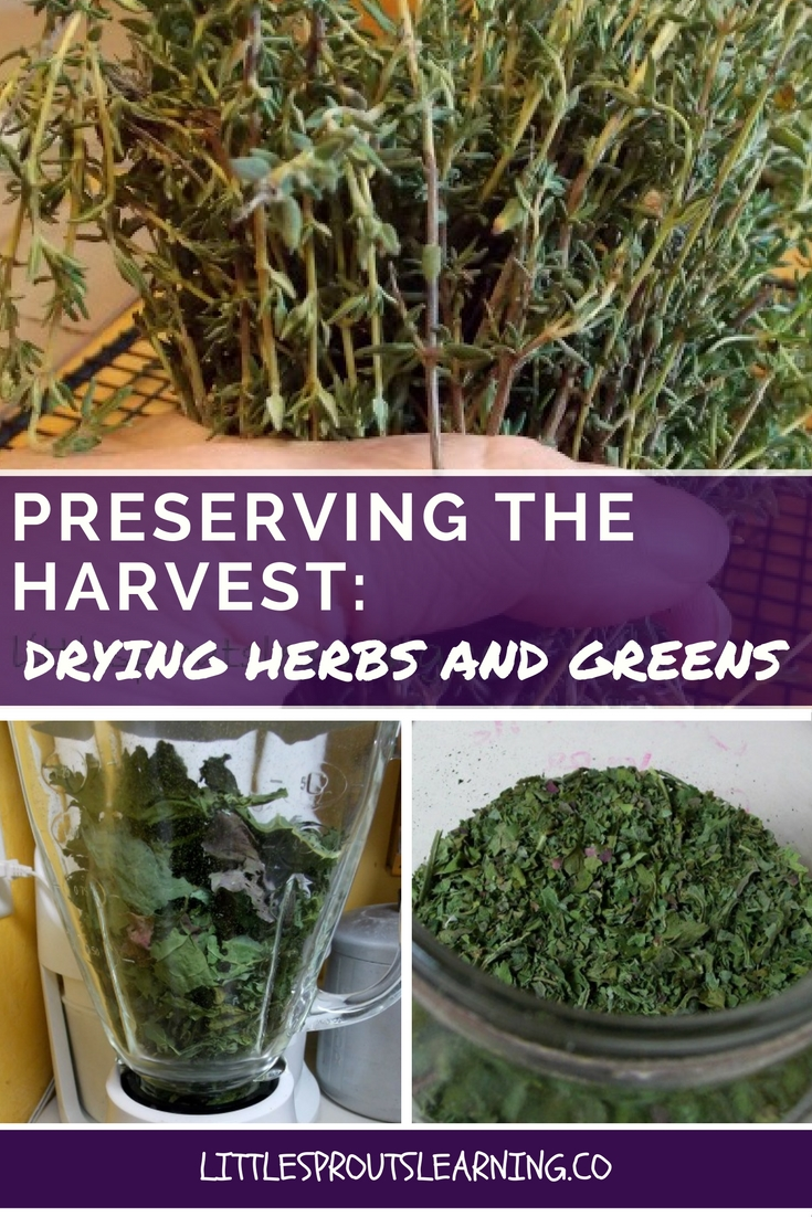 Preserving the Harvest- Drying Herbs and Greens