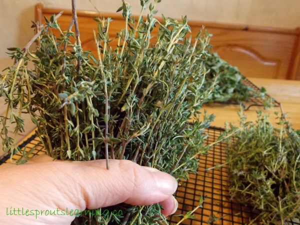 Bunch a handful of herbs in your hand and tie and set them in a paper bag that you have previously cut slits in.