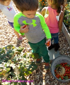 gardening with kids harvesting