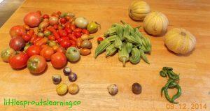 harvest gardening with kids