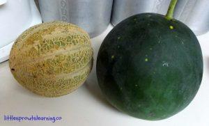Melon Harvest
