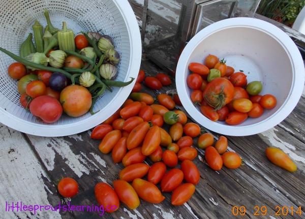 EASY! 5 Steps to Planting a Sensory Garden for Kids, harvest