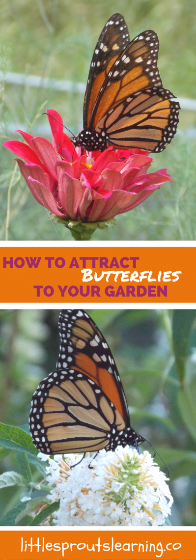 How to Attract Butterflies to Your Garden - Little Sprouts ...