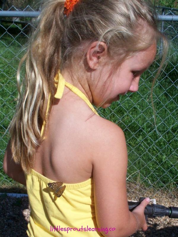butterflies in the children's garden