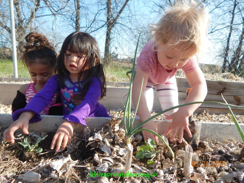 kids planting spring seedlings
