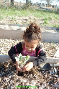 planting spring seedlings with kids