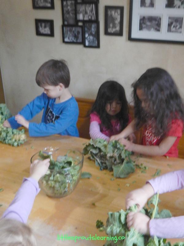 preschoolers harvesting brussels sprouts