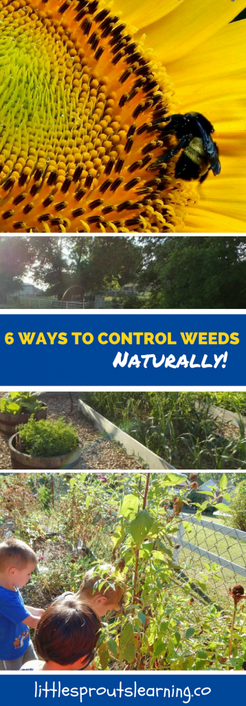 6 ways to control weeds naturally in the garden without chemicals