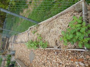 april potatoes in the children's garden