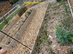 cabbage and spinach in the children's garden