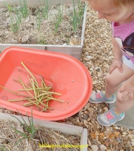 children picking asparagus