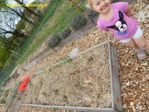 children's garden, asparagus