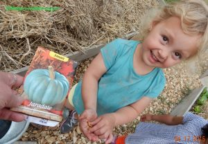 planting pumpkins with kids
