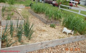 may gardens, onions, garlic, asparagus