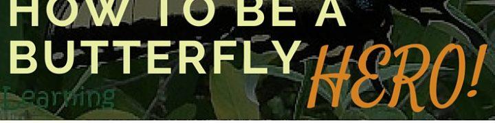 Butterfly hero, milkweed, monarchs, pollinators, butterfly
