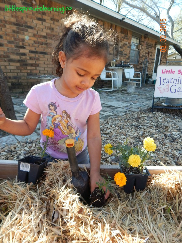 Planting flowers for pollinators