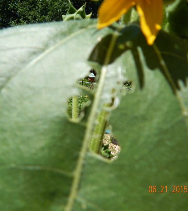 bug damage in the garden