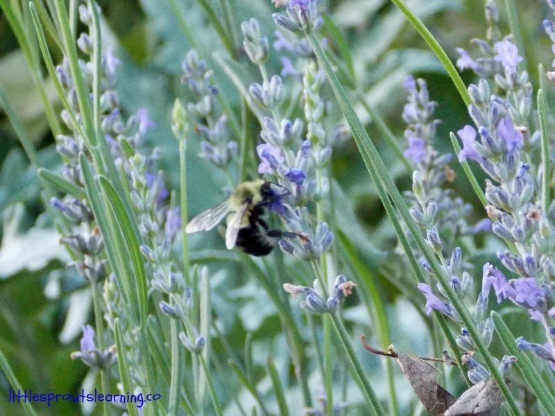 bumblebee wings (2)