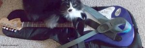 guitar hero kitty