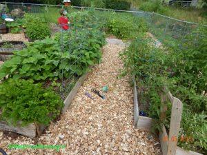 june garden