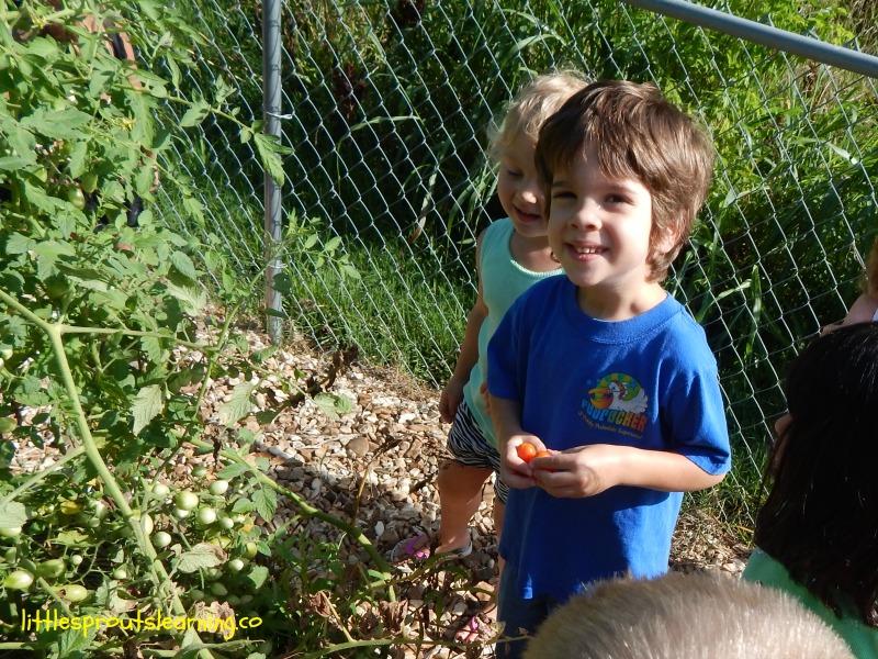 6 Plants to Grow in a Children\'s Garden