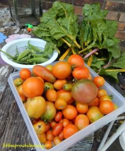 kid's garden harvest
