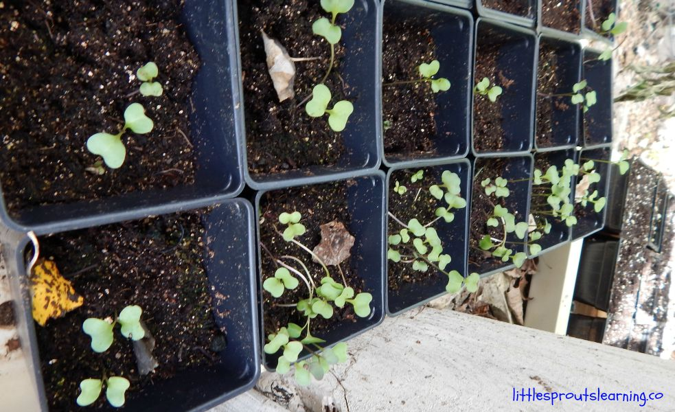 Fall seedlings, 19 Money Saving Tips for the Garden