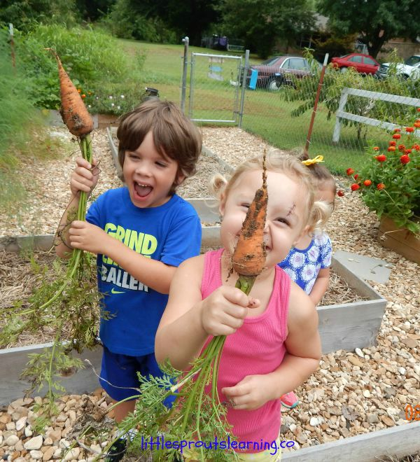 gardening with kids, carrots