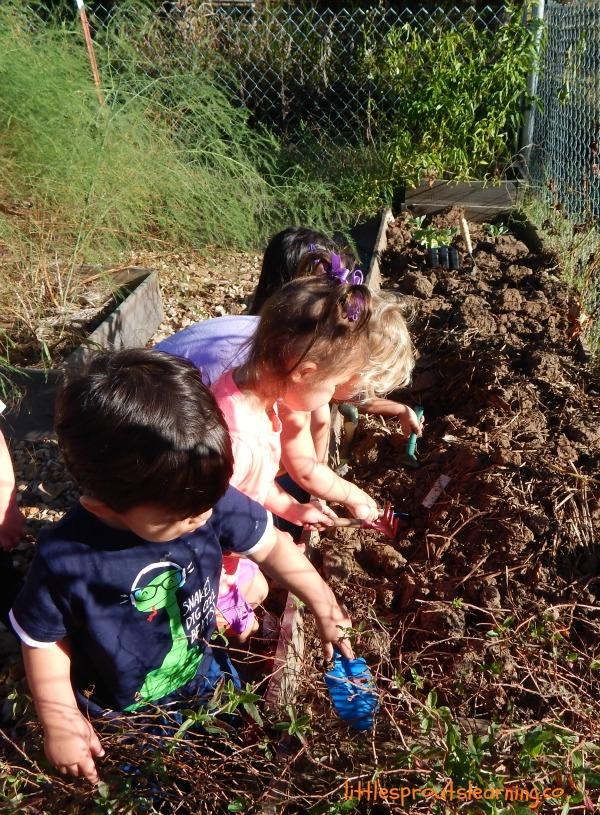toddlers harvesting sweet potatoes