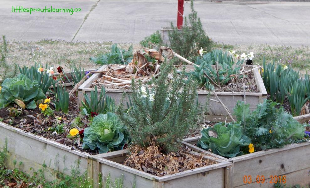 garden chores in spring