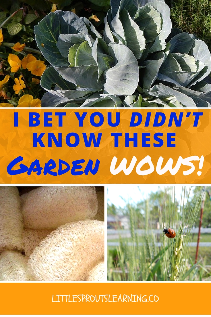I Bet You Didn't Know THESE Garden Wows!