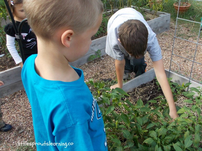 many benefits of gardening in raised beds