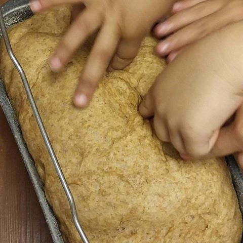 punching down homemade bread dough, teaching kids where food comes from