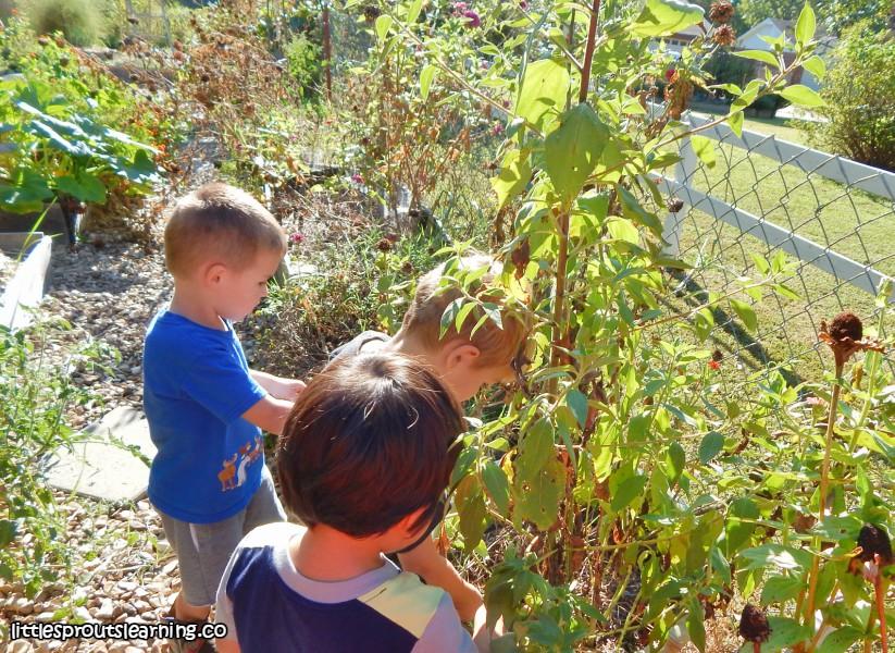 kids-harvesting-jerusalem-artichokes