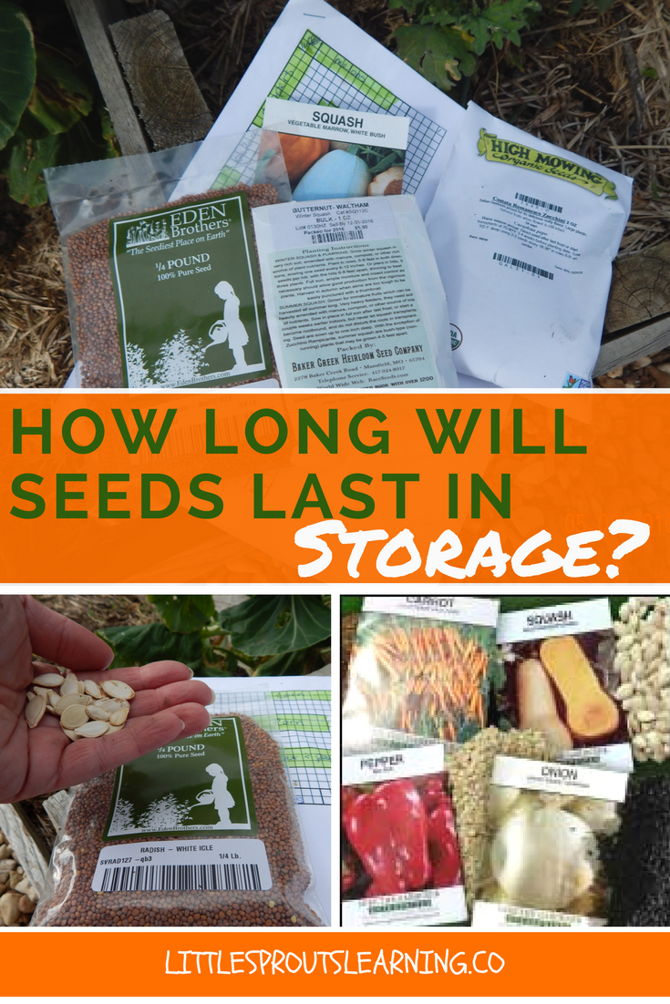 how-long-will-seeds-last-in-storage