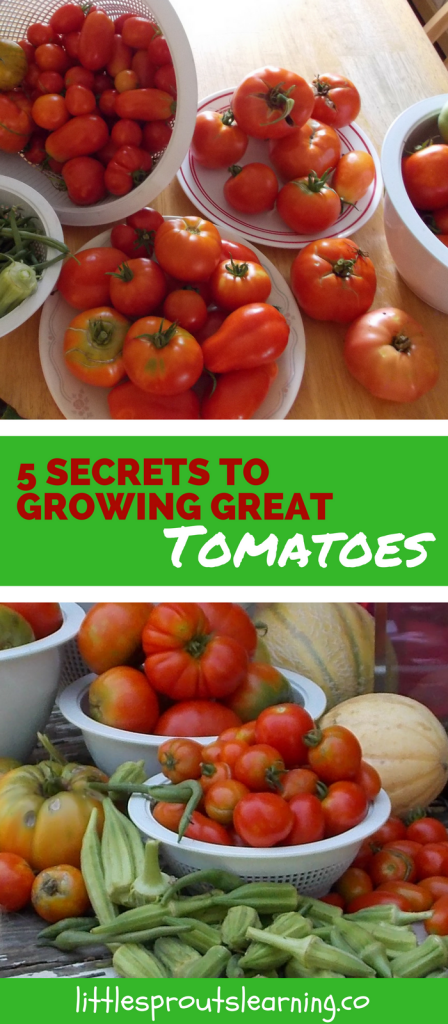 5 Secrets to Growing Great Tomatoes