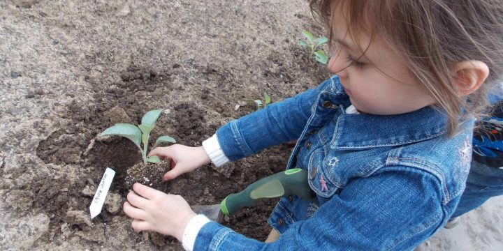 What can you do in the garden in March to make sure your garden season is the best it can be? March is an exciting time in the garden. So much to do!