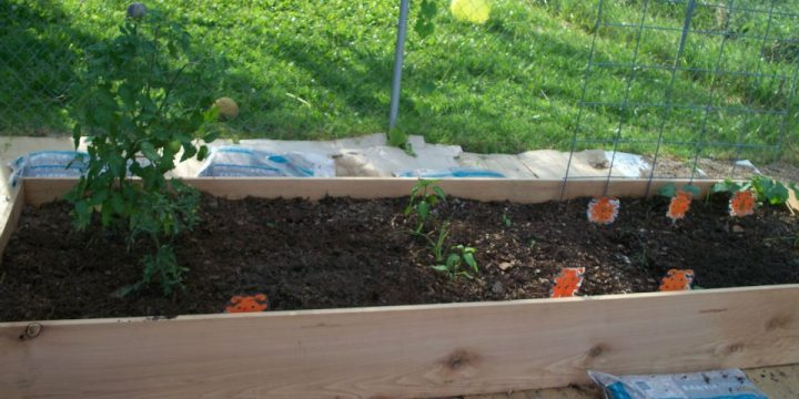 The dirty secret to success in the garden is having great garden soil. It usually doesn't happen naturally, it takes a little time to build great soil.