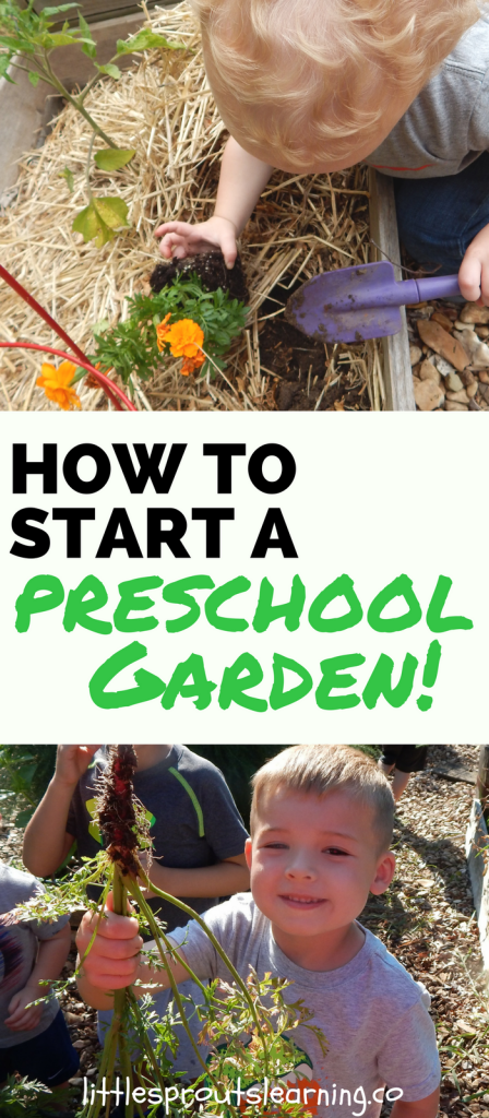 How to Start a Preschool Garden