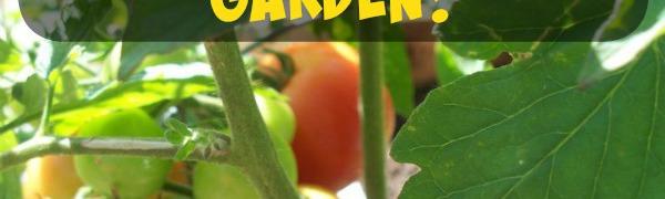 Preschool Gardening, what's growing?