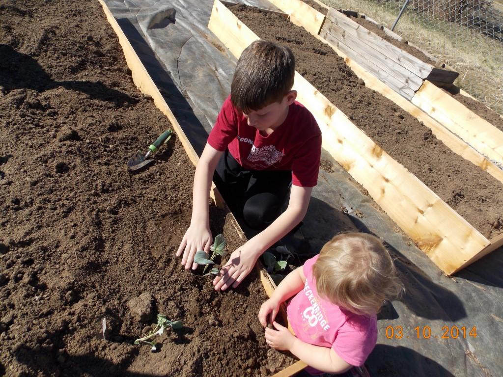 Kids planting seedlings in new raised bed gardens