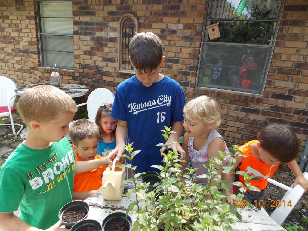 Kids watering seedlings in small pots on the patio, successful garden with no garden skills