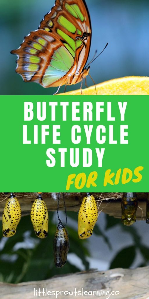 Is there anything more mysterious in life than metamorphosis? Teaching kids a butterfly life cycle lesson plan is something they will never forget!