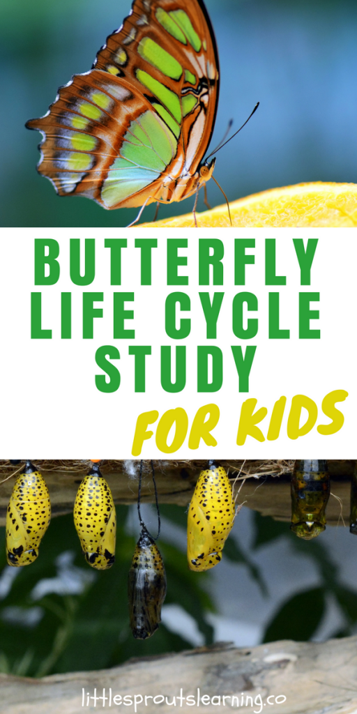 Butterfly Life Cycle Lesson Plan for Kids
