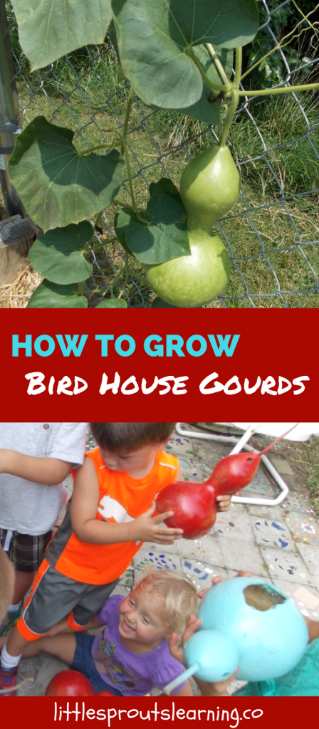 How to Grow Bird House Gourds