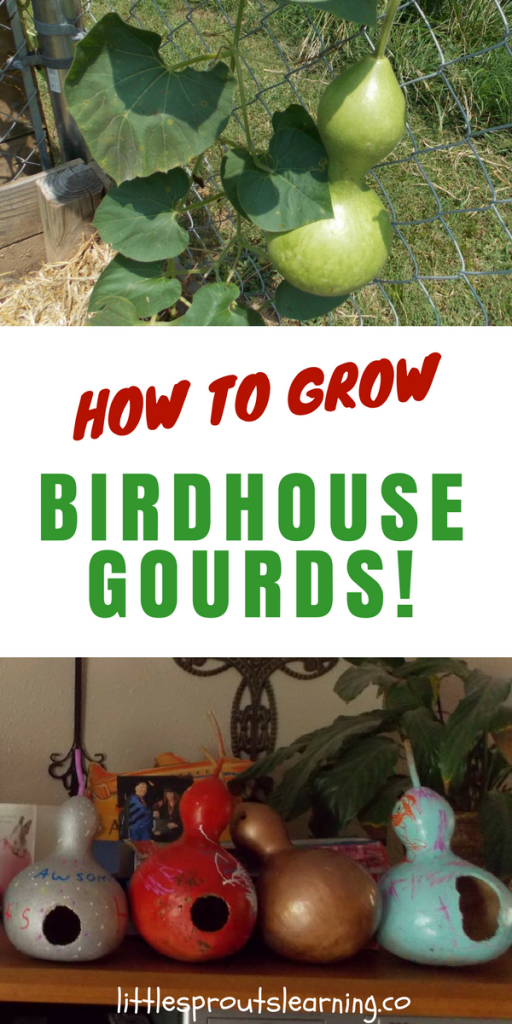 How to Grow Birdhouse Gourds!