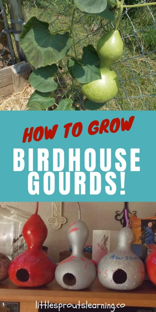 Growing birdhouse gourds for crafts is easier than you think. Drying gourds and making birdhouses from them takes some time, but it's simple to do and fun.