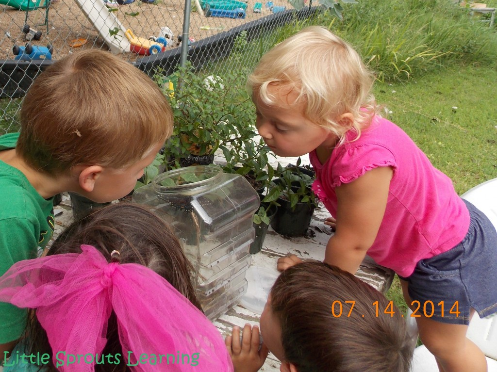 Butterfly Life Cycle Lesson Plan for Kids, group of kids standing around a table with a clear plastic box that had a butterfly waiting for release. Kids are in awe observing the butterfly.