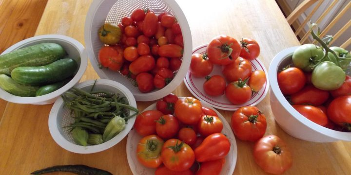There's that certain time of the year when produce from your garden is drowning you from every side. What do you do with all the excess tomatoes your garden produces? You know in a few months, you'll be longing for those delicious home-grown tomatoes again and they will be nowhere near.